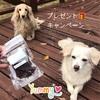 信州鹿肉ジャーキープレゼントキャンペーン☆