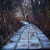 晩秋の木道