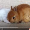 可愛いウサギの姉妹 仲良し姉妹