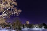 中島公園からオリオン座と冬の大三角が見えた。