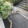 台風21号の傷跡が凄いですね…被害もたくさん、ご注意を!