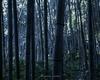 【京都ぶらりはらさんぽ3】嵐山の竹林と金閣寺という王道を行く