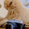 Fujifilm X-E2(ぷくママの)