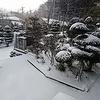 雪だよーん!