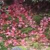 「紅葉狩り」