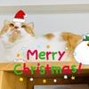 るるちゃんのクリスマス物語のはじまりはじまり♪