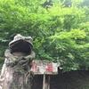 重源の郷|山村風景を楽しめるノスタルジックな体験公園