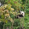 パンダが話題の上野動物園に行ってきた