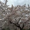 【レポ】第34回三好池桜マラソン