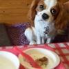 (dog) プラスワンモルティッシュ cafe