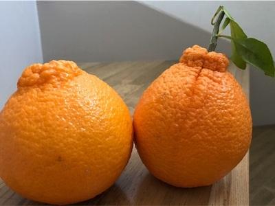 今年も届きました〜不知火と清見オレンジ〜
