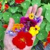 畑の花々が開花。