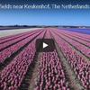 ドローンで上空から見たオランダの花畑がオドロキの美しさ