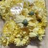 【菊の花のおひたし】菊の花をどうやって食べるかに挑戦してみた話