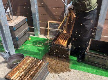 都心の養蜂から生物多様性を考える-東京・竹芝の「ミツバチプロジェクト」