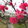 樹木医師の赤色の花が魅力的な庭木