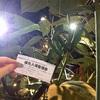 さいきょうのかまきりのひみつin伊丹市昆虫館