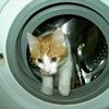 〈洗濯ミス〉洗濯洗剤をまちがえた話+α〈選択ミス〉