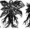 1人FBIの回~未確認植物UP(Unconfirmed plant)マンドレイクの回~🌱🌱