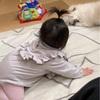 ☆生後9ヶ月娘とワンコの遊び☆