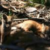 Wild animals〜Grand Teton.3