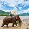 【ラオスで象使い士になろう!!】〜いざ象使い士講習会に参加してきたゾ!!〜