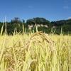 「通い稲作塾!」 実りの秋に稲刈りしようぜ!