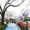 播磨坂さくら並木、良い感じに桜が咲いてました。