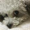 犬の寝姿が可愛すぎて幸せ(笑)そしてついに、白目降臨