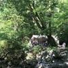 ★子連れキャンプ★ ⑦道志の森キャンプ場@山梨