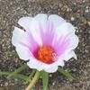 緑道の花壇3