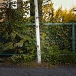 蔦とフェンスと季節の動静が生み出す風景【フォト雑記】