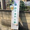 壮観!15万本のひまわり!!蓮田ひまわり畑!!!