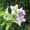 春が待ち遠しい植物