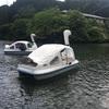 埼玉:第2回鎌北湖スワンボートレース