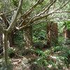 亜熱帯の森に潜む台湾人の息遣い