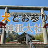 神祇大社で健康祈願!愛犬とお参りできる伊豆の神社へレッツゴー!!