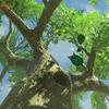[ゼルダBotW:02]ハイラル風景写真集、コログと植物編。