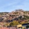 福島の桃源郷と言われる花見山に行ってきた