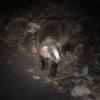 アナグマとのディスタンス? ~Distance from the Badger?