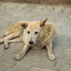 【一日一枚写真】インドの野良犬達 Part.2【一眼レフ】