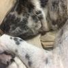 【老犬と暮らす】犬といっしょに災害にあった時