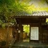 京都 青モミジの蓮華寺