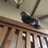 階段に関所を設置しました。