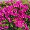 春爛漫、中央地区の花!その2