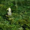 【名水百選 水源巡り】 阿蘇産山『池山水源』を気ままに散策してみました!!
