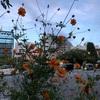 もう秋の花が咲いてるのを見たので割り切って季節が変わったことを受け入れよう