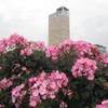 高松港とバラの花