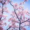 春の始まりと思い出