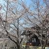 路地裏桜2018~「立本寺」